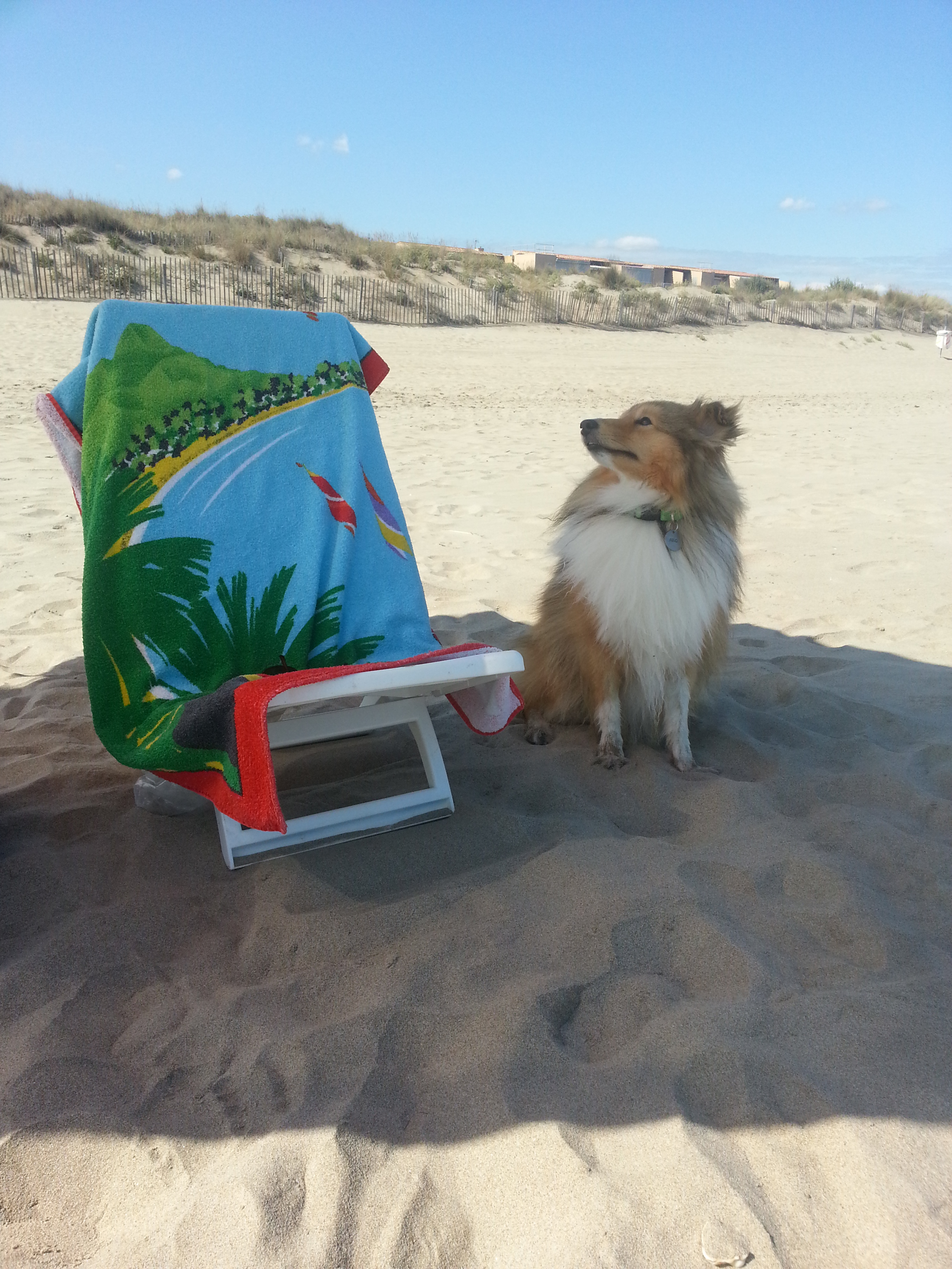 Votre chien à la plage : conseils et préparatifs