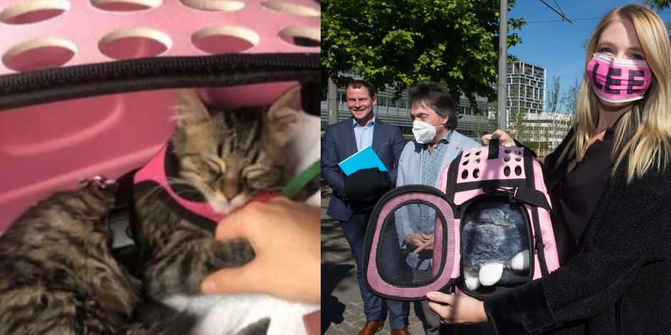 lee-le-chaton-ne-sera-pas -euthanasié