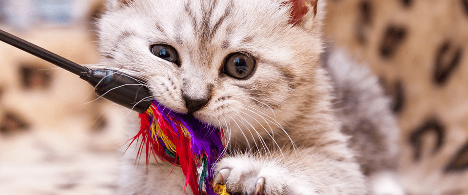 canne à pêche pour chat
