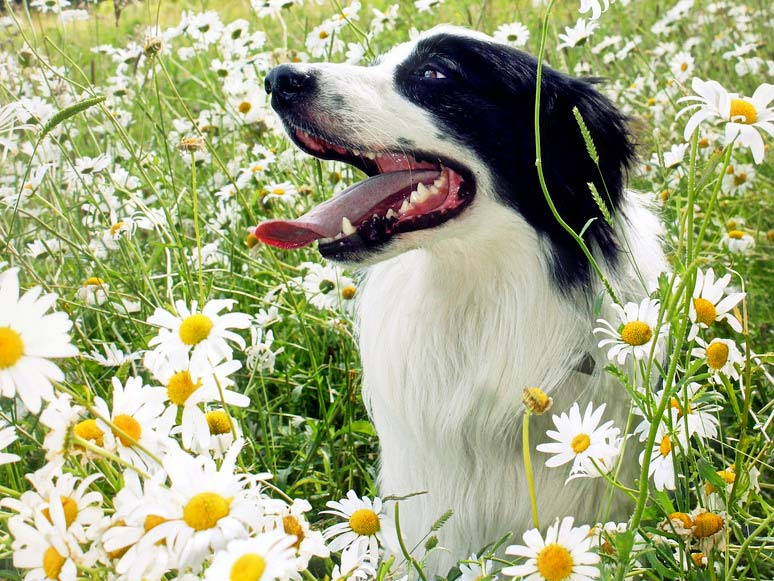 fleurs de bach chez les animaux