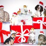 Noël des animaux 2020 : environ 93% des animaux recevront un cadeau sous le sapin