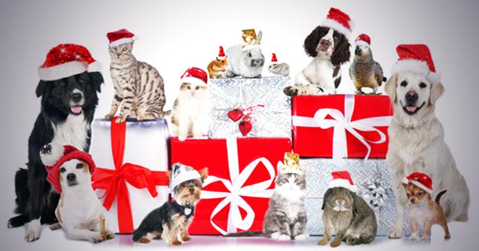 des cadeaux de noel pour vos animaux