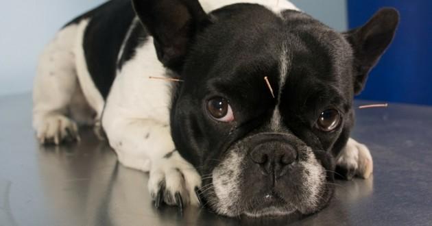 animaux et médecines alternatives
