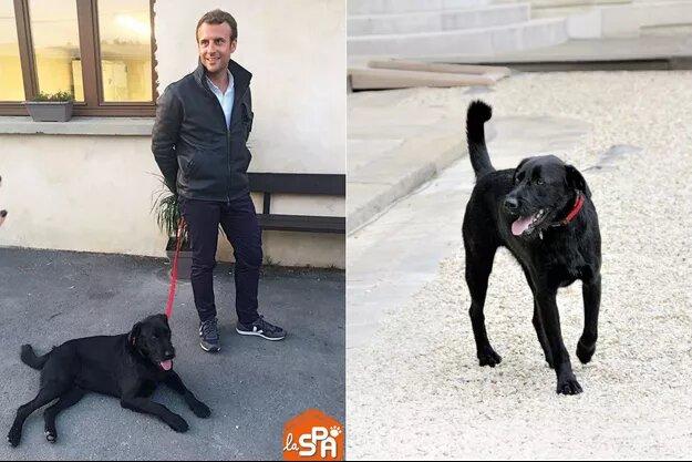 le-chien-présidentiel-milite-pour la-bonne-cause