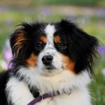 La parvovirose canine : symptômes et causes