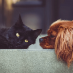 Les animaux connaissent-ils le deuil ?